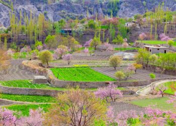 Stunning View during Hunza's cherry blossoms